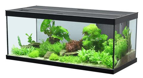 aquaristik aquarium wien benno david og liechtensteinstra e 114 116 1090 wien. Black Bedroom Furniture Sets. Home Design Ideas