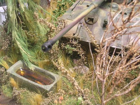 Kleine Details im Untergebüsch, wie die wassergefüllte Steinwanne