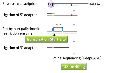 Transcription Start Site determination using DeepCAGE