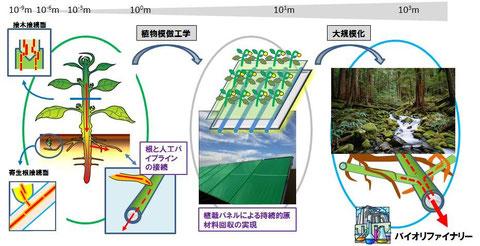 植物から持続的に資源回収することをめざすGreen Pipeline。