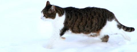 Kilian im Schnee
