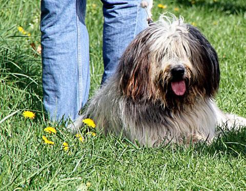 Hund im Holzbachtal-Stadion Weiskirchen