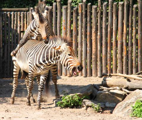 Zoo in Landau