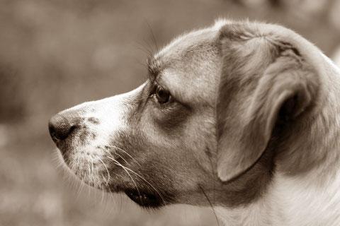 Tierfotografie, Hunde, Katzen