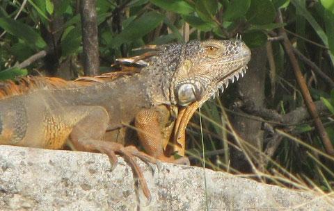 La plus belle histoire que j'ai à raconter est en Guyane mais il y en à  Saint Martin