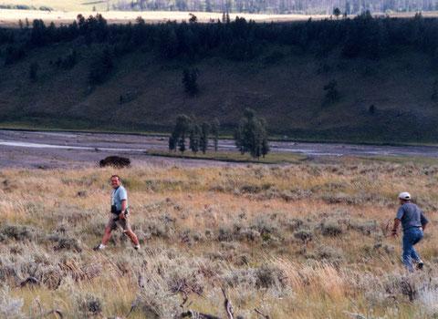 Une première approche sur un bison avec Christian mais, 20 ans après, l'histoire reste à écrire...