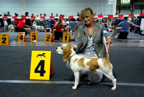 "Internationale Dog Show Luxembourg 2013 Candy Championklasse ""excellent 4"""