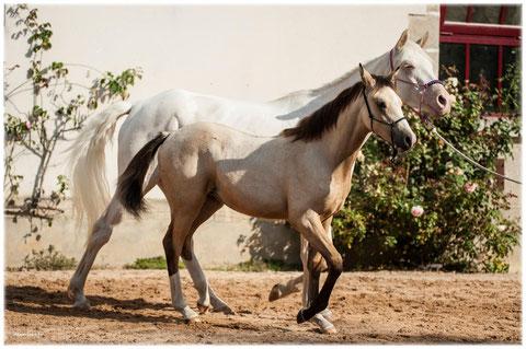 Caméline d'Edel au chevaux du monde 2012