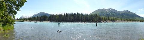 Am Russian River angelt man den Red Salmon meist vom gegnüber liegenden Ufer aus.