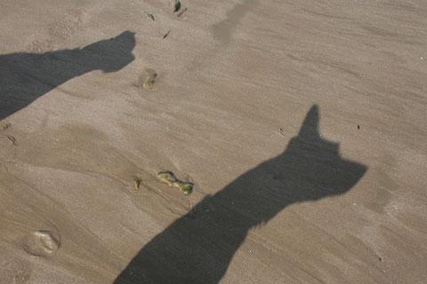 """""""Wende dein Gesicht der Sonne zu, dann fallen die Schatten hinter dich."""" - Aus Afrika"""