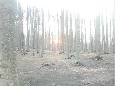 Monte Amiata bosco del Prato Macinaie