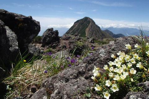 登山 ガイド プラン