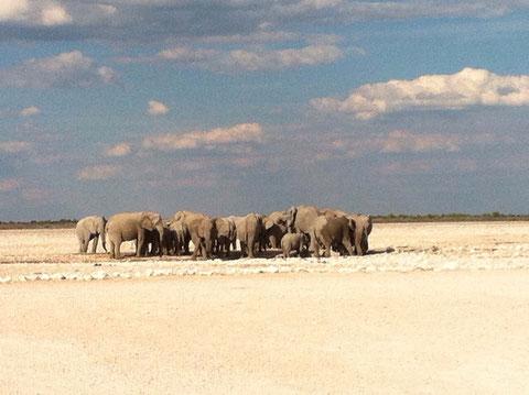 Elefantenherde am Wasserloch im Etosha Park