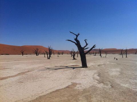 Die toten Bäume im Sossusvlei