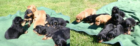 Im Alter von 3 Wochen nehmen wir unser erstes Sonnenbad.