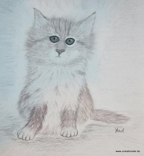 "Astrid Maul - ""Kleine Langhaarkatze"", farbige Kohlestifte auf Aquarellpapier, 30 x 40cm"