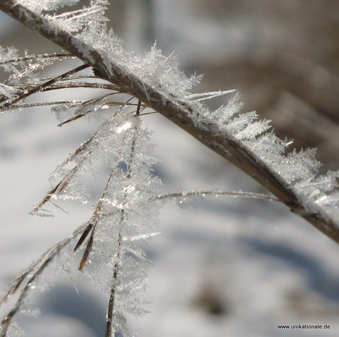 Foto und (c) Astrid Maul - Eiskristalle auf einem Grashalm