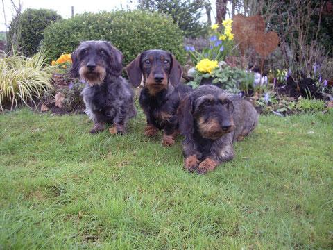 Grille,Ronja und Lotte bei uns im Garten