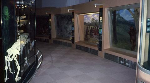 群馬県立自然史博物館常設展示「Dコーナー.自然界におけるヒト」