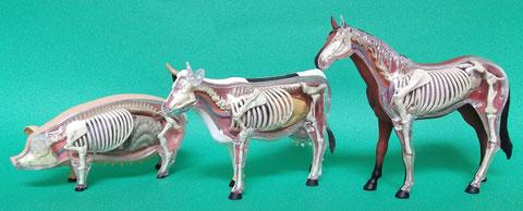 動物種別獣骨報告:ブタ(豚)・ウシ(牛)・ウマ(馬)の模型[左から]