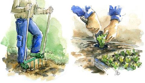 Travail du sol et repiquage. (Editions Larousse)