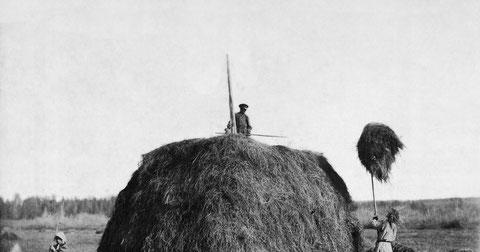 Заготовка сена в Якутске