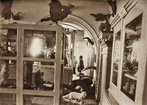 Естественно-исторический отдел музея