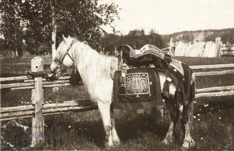 Якутская лошадь на празднике. А.Курочкин