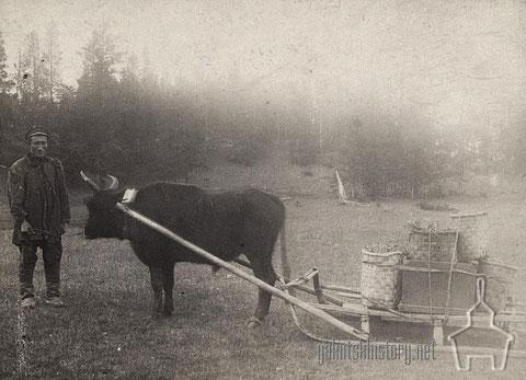 Перевозка груза лѣтомъ на саняхъ быкомъ