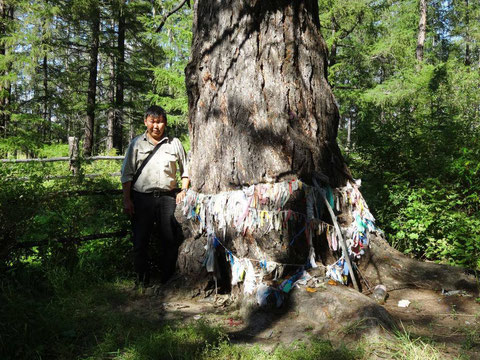 Суон-Тиит - дерево Духа местности