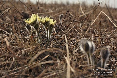 Якутия. Весна. Фото Алексей Жебрикова