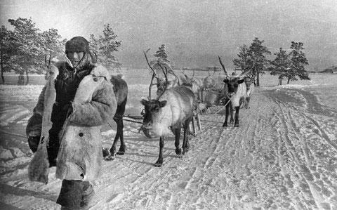 Перевозка грузов на оленях. Якутия