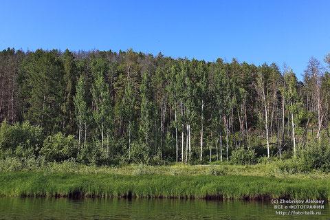 Якутская тайга. Фото Алексей Жебриков