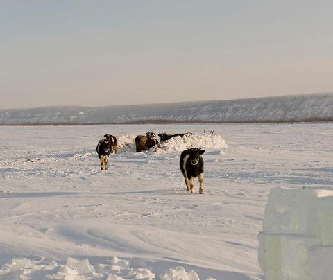Якутия. Фото Айар Варламов. YakutiaPhoto.com