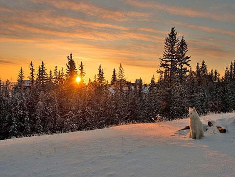 Якутия. Зимний пейзаж. Фото Айар Варламов