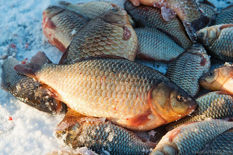 Рыба с подледного лова (мунха). Фото Айар Варламов