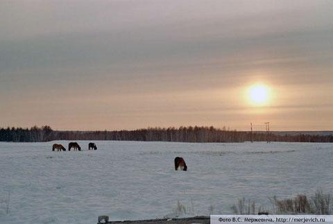 Якутский пейзаж