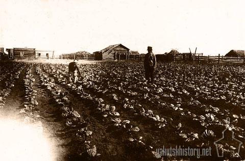 Корейская табачная плантация в Якутске. Альбом КЯР 1926-1930 гг.