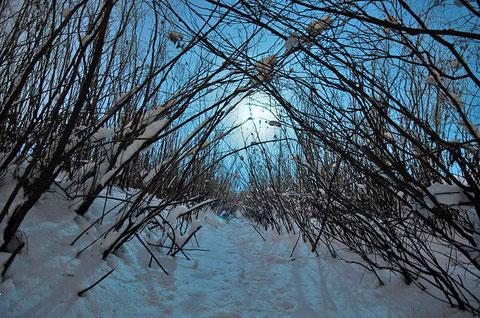 Якутия. Фото Айар Варламов