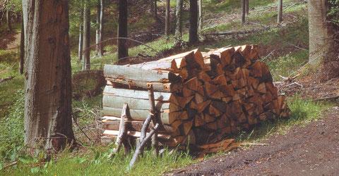 Holz - Energie, die nachwächst.