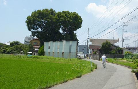 """のどかな""""西国街道""""沿いの西宿にある「北向き地蔵」のクスノキの大木"""