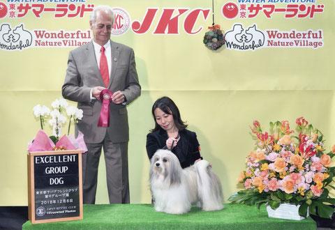 犬種ハバニーズ ドッグショーチャンピオン犬 「仁」