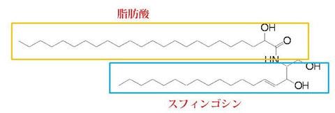セラミド3の構造