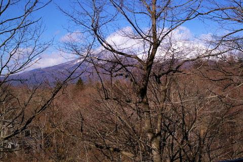 葉が落ちれば浅間山がきれいに見られます