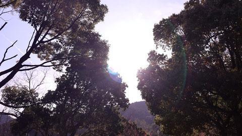 太陽の輪、森林、木、山の写真フリー素材 Photos of cherry blossoms, flowers, spring, forests, trees, mountains Free material