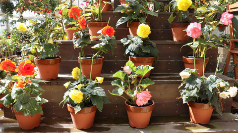 植木鉢たちの写真フリー素材 Photo free material of flowerpots