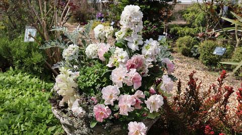 白い花の花壇の写真フリー素材 White flower flowerbed photo free material