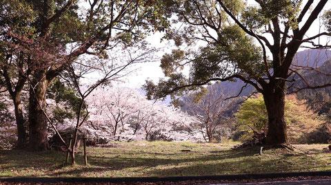 桜、花、春、森林、木、山の写真フリー素材 Photos of cherry blossoms, flowers, spring, forests, trees, mountains Free material