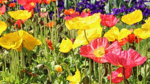 色鮮やかな花の写真フリー素材 Colorful flower photo free material
