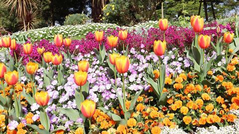 庭園の写真フリー素材 Garden Photo Free Material